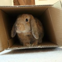 Heavy Boxes - Moving Companies Near Me